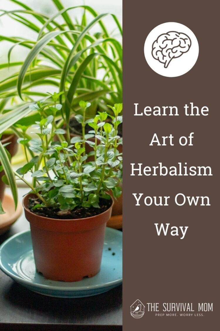image: pots of herbs