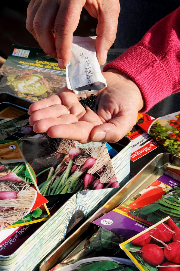 gardening success, must-haves for gardening, saving seeds, what seeds to buy, best seed companies, best seed catalogs