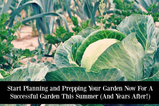 best gardening advice, blogger tips for gardening