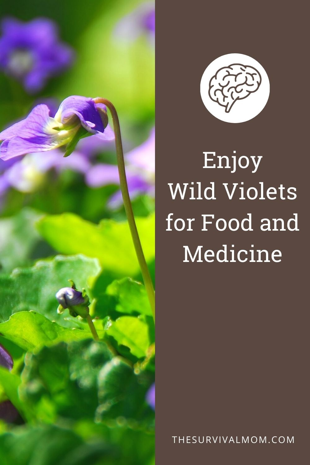 10 Ways to Use Wild Violets for Food and Medicine via The Survival Mom