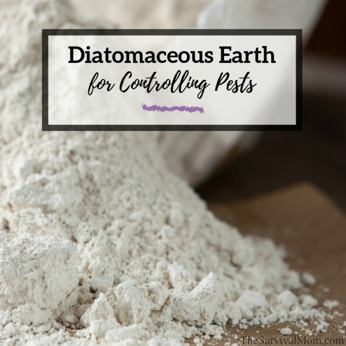 Diatomaceous Earth for Controlling Pests via The Survival Mom