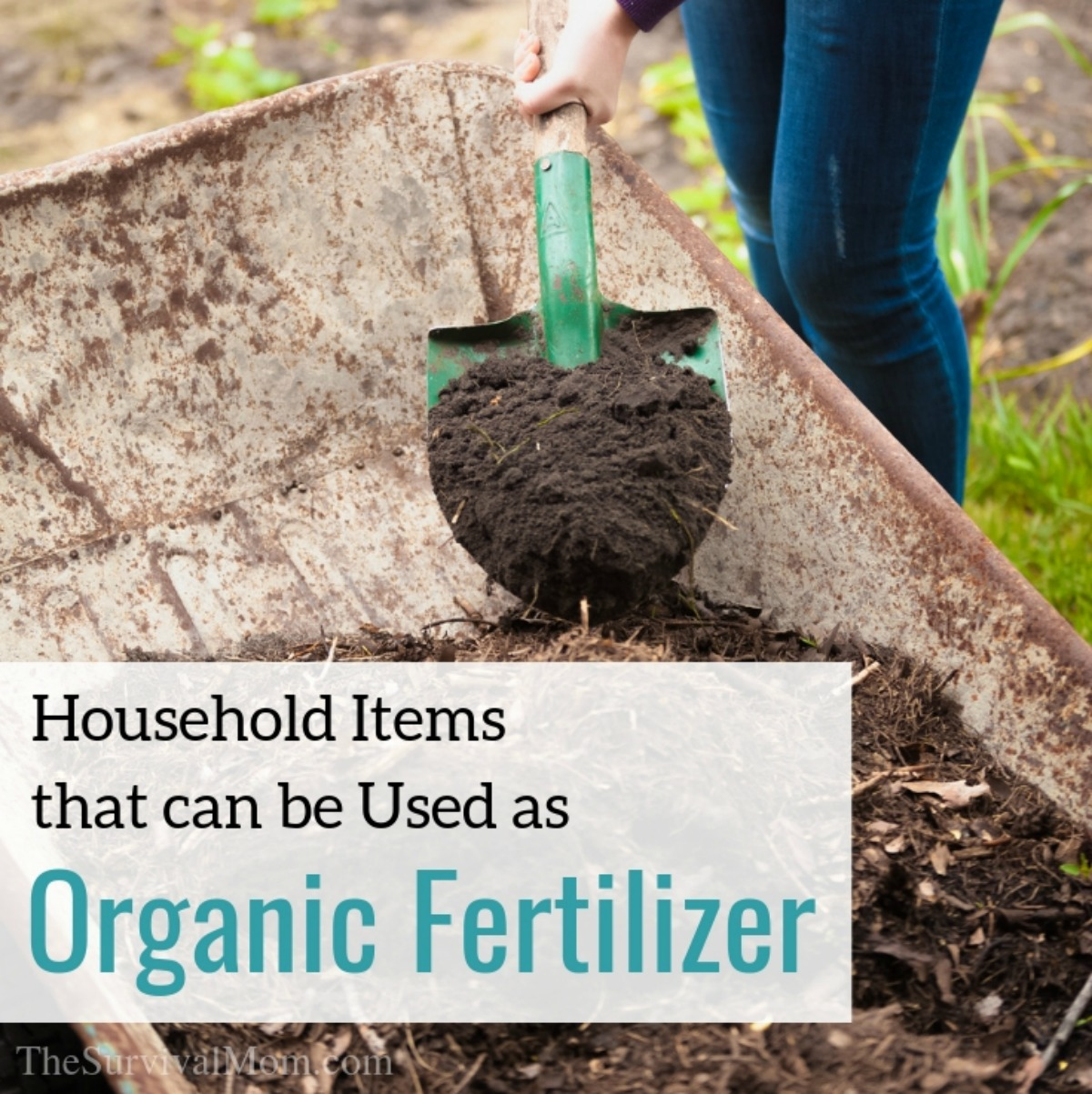 Household Items that can be Used as Organic Fertilizer and plant food