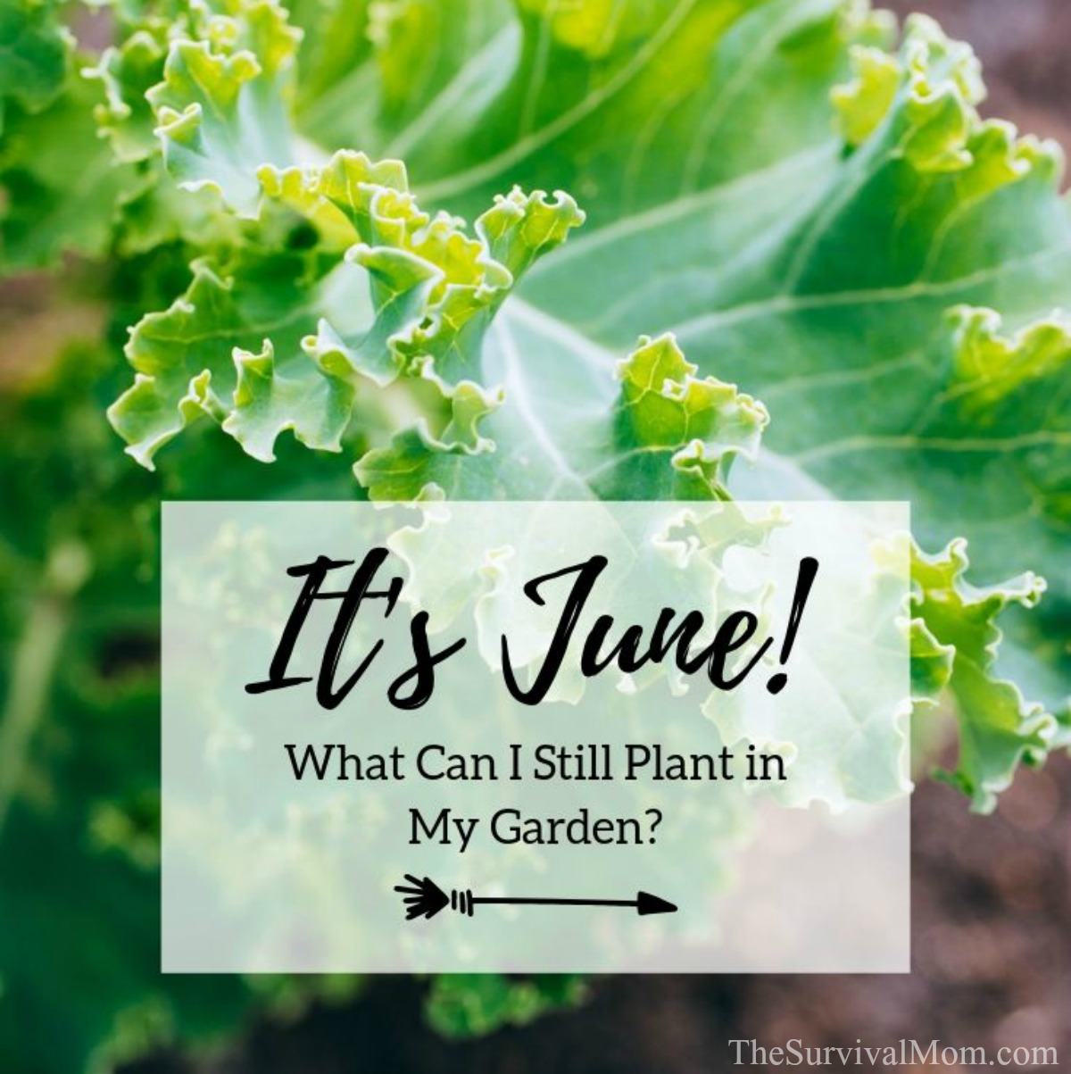 It's June Mid to Late Summer Gardening via The Survival Mom